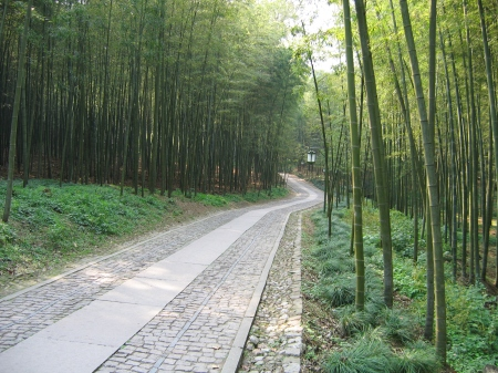 China_Hangzhou_Bamboo_Lined_Path_at_Yunqi